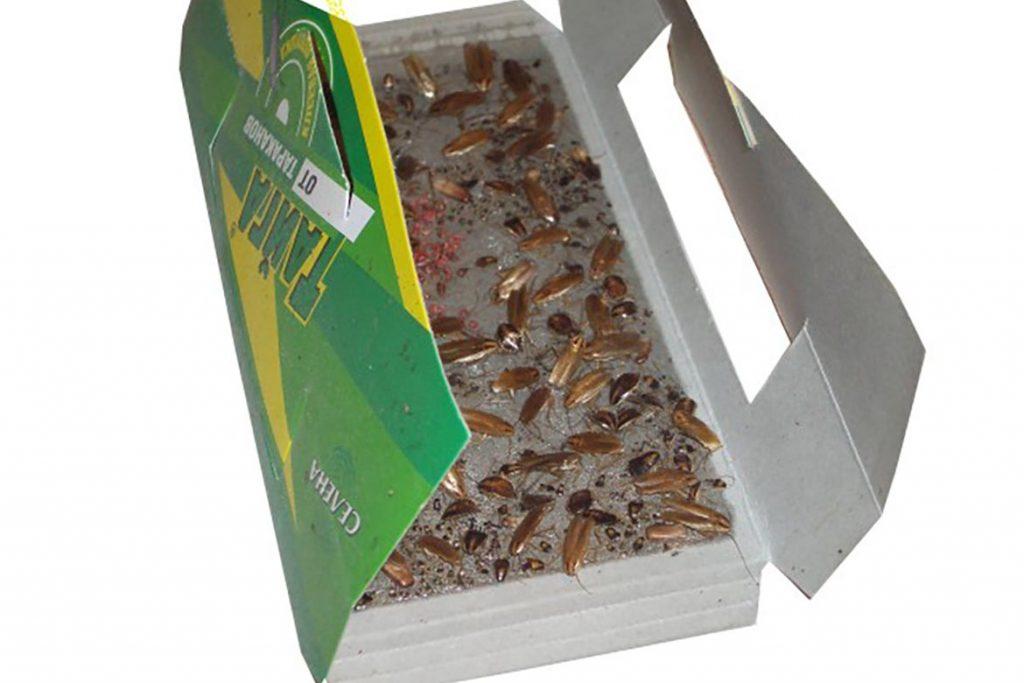 Клеевая ловушка «Тайга» для тараканов состав, принцип действия, где купить, отзывы покупателей, использование