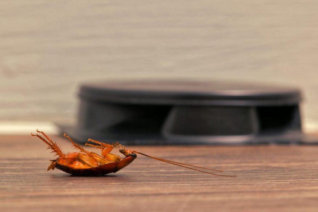 Ловушка для тараканов Рейд Макс (Raid max): безопасное использование и гарантированный эффект, отзывы о применении