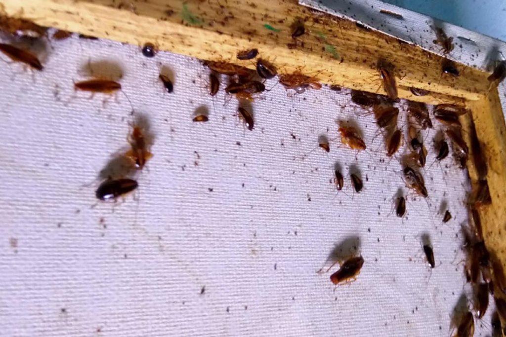 ТОП-10 средств от тараканов, безопасных для кошек – как избавиться, чтобы домашние животные не пострадали, вред от тараканов