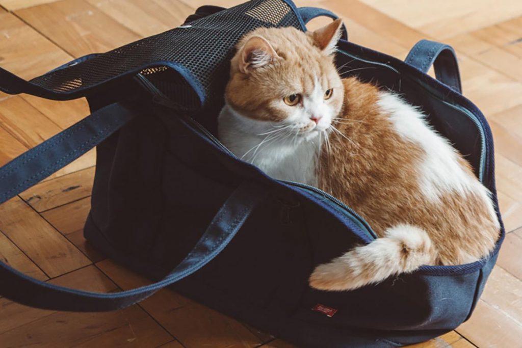 ТОП-10 средств от тараканов, безопасных для кошек – как избавиться, чтобы домашние животные не пострадали, сложности