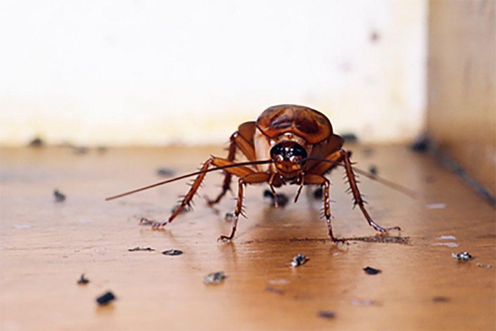 ТОП-12 лучших спреев и аэрозолей в борьбе с тараканами – отзывы об использовании, где купить и по какой цене, когда нужен аэрозоль