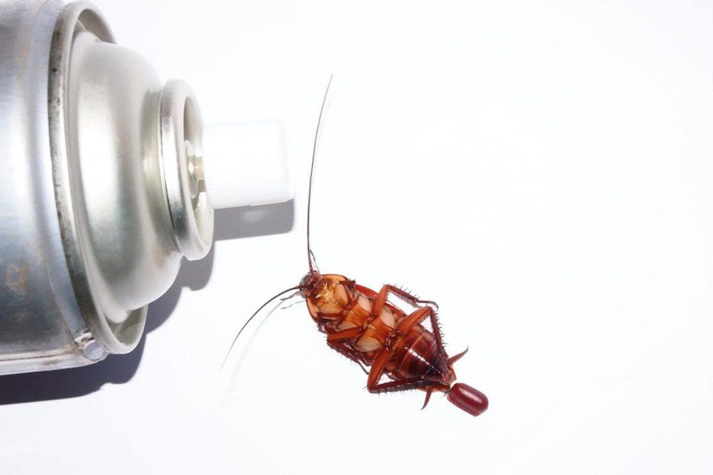 ТОП-12 лучших спреев и аэрозолей в борьбе с тараканами – отзывы об использовании, где купить и по какой цене, выбор препарата