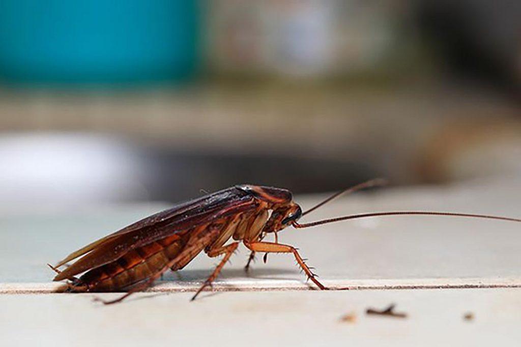 ТОП-5 лучших средств торговой марки Delicia против тараканов линзы, порошок, спрей, аэрозоль, боксы-приманки, отзывы об использовании, действие ловушек